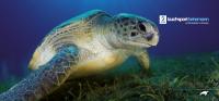 TSH Prämie - Gutschein 10,00 EUR - Motiv: Schildkröte
