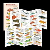 Fischkartenset Mittelmeer