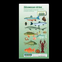 Fischkartenset Süsswasser